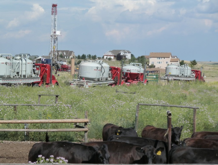 co cows and halliburton trucks